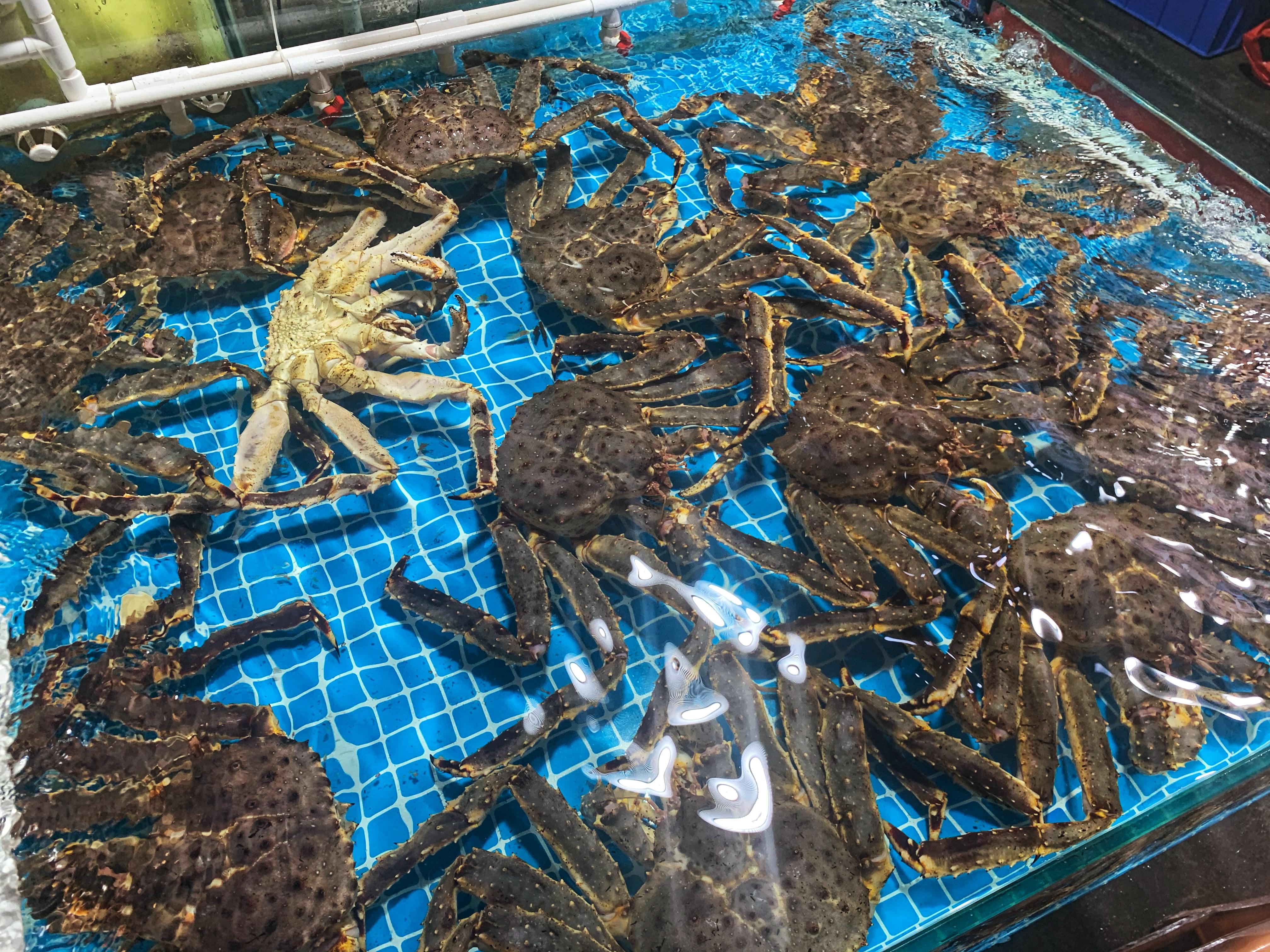 厦门海鲜蟹